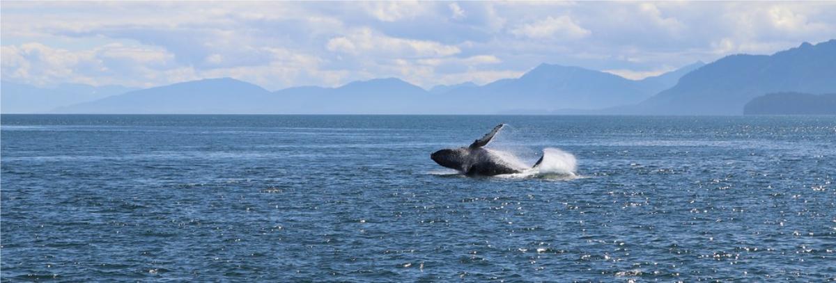 juneau whale